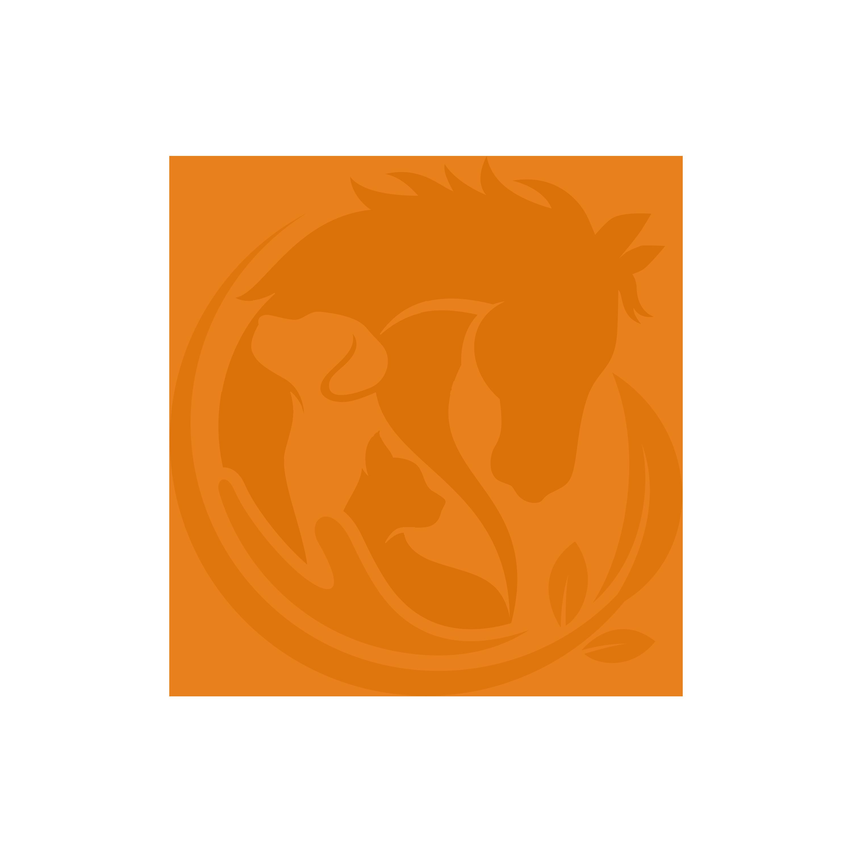 business logo copy